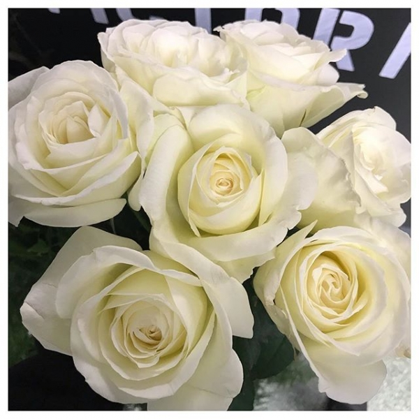 Working with these beauties today.. Such an elegant rose called Norma Jean.. And they smell as good as they look too! 😍..#rose #white #insta #instaflorist