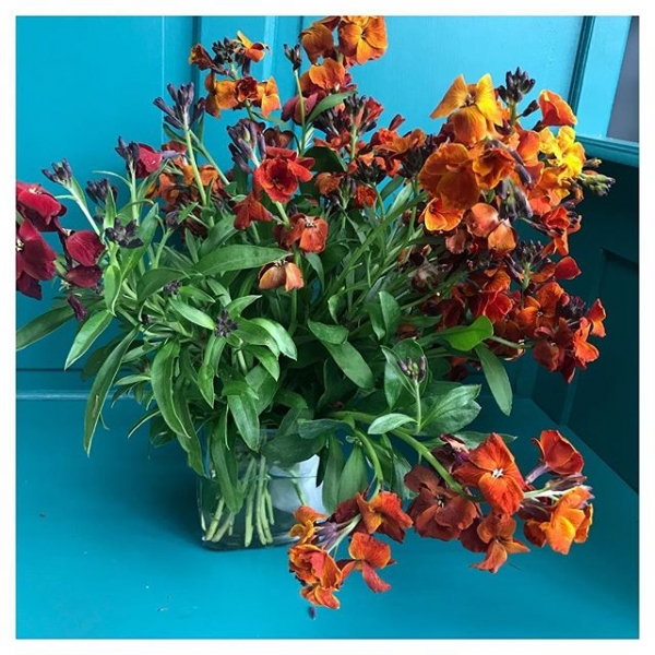 Beautiful casket spray made all the more special by adding some home grown wallflowers 😍🌺...#florist #instaflower #instaflorist #floristsofinstagram #burnt #colours #spray #sympathy #casket #wallflower #homegrown #rose #underthefloralspell #Burnham #victoriajaneflowers