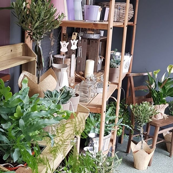 'Greening up our gaff!' Fresh plants and new containers in stock… #plants #olive #fern #succulent #floristshop #burnham
