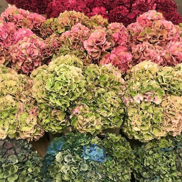 Hydrangea anyone?!.. 💜 Our personal favourite in the shop! And the best bit is they are easy to dry so you can enjoy for longer! #bestseason #hydrangea #floristshop