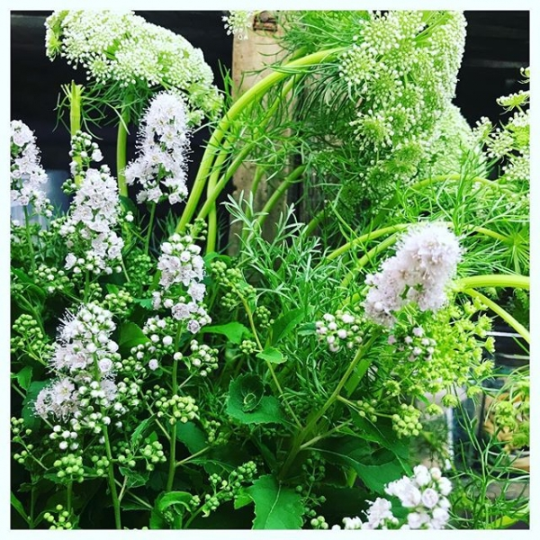 Getting to use this beautiful shrub on this weekends wedding.. 😍👰 🎩 This shrub is called Spirea common name Bridal wreath. It comes in white and candy floss pink.. It's going to sit delightfully nestled into the garden roses,Alchemilla, Ammi, mint and rosemary.. perfect for the garden style wedding!.#instaflower #garden #shrub #wedding #weddingflowers