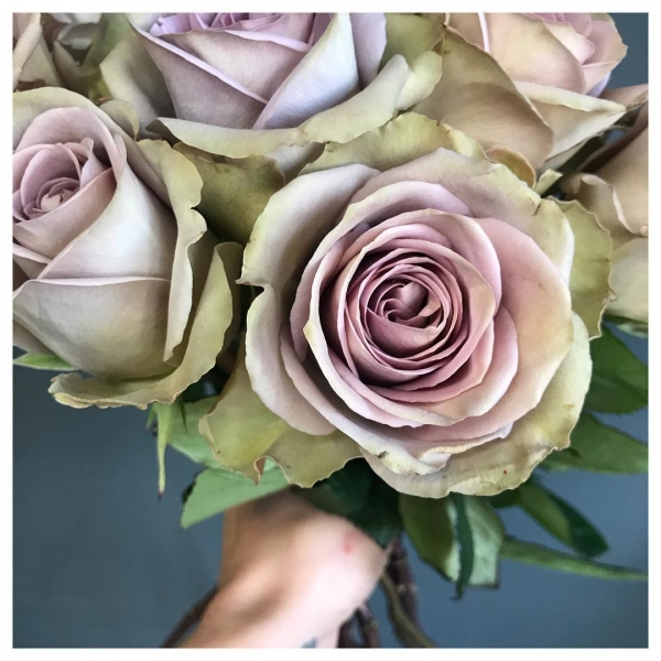 Amnesia Roses.. These roses come in a unique colour pallet with a blend of beige, lilac & green. They are one of the most beautiful vintage roses you can find and look stunning in bridal work.. A marmite rose.. you ether love or hate them! We definitely Love!.. thoughts?!.. 💗🌸🌿....#flower #wedding #weddingflowers #roses #love #allyouneedislove #marmite #amnesia #vintage #mutedtones #victoriajaneflowers #bucks #bucksflorist #burnham