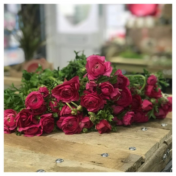 "One of the most common questions we are asked as florists are ""what are your favourite flowers?"" Such a tricky one to answer.. joining this industry for nothing less than the love of flowers and nature it's too hard to pick just one.. Paeonia?.. Rosa?.. Anemones?.. cosmos?.. Astilbe?.. Astrantia?.. to name a few UNTIL.. until these beauties come into season!.. 😍 Ranunculus you have stolen my heart for another season 💗 The array of colours they come in and with an abundance of petals you only need one in a vase to showcase them.....#love #flower #instaflorist #ranunculus #rose #peony #season #autumn #winter #pink #victoriajaneflowers #shop #retail"