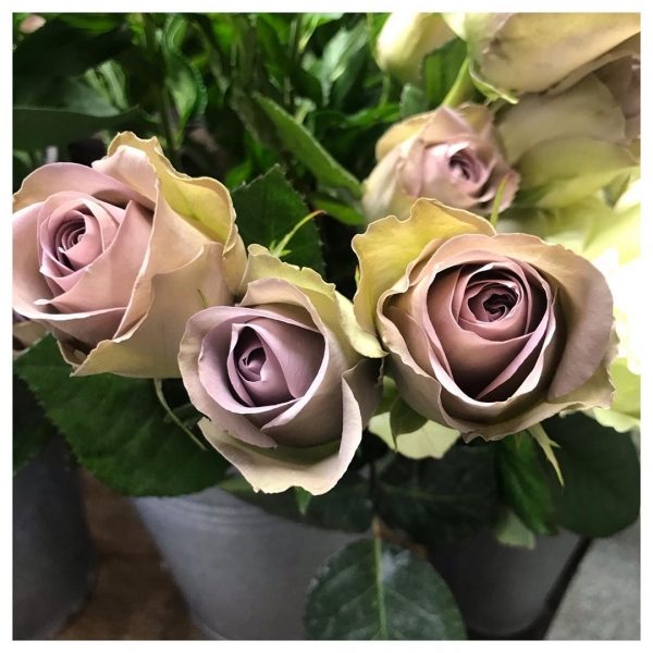 The Amnesia Rose.. The undisputed queen of vintage roses 🌹 .A very popular wedding Rose, used to fit in with the current fashion of 'vintage wedding flowers' A strong stem crowned with an antique lilac flower with accents of beige and green! We absolutely love it!.. Do you?.. Your thoughts!??! … ..#Amnesia #antique #vintage #lavender #brown #green #purple #unique #versatile #rose #wedding #marriage #bouquet #love #victoriajaneflowers