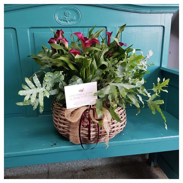 It's not only flower bouquets we offer, we also can make beautiful planted arrangements, a lovely alternative gift 🌱 Prices from just £40 ..#plants #instaplant #gift #birthday #present #localdelivery #longlasting #victoriajaneflowers #windsor #maidenhead #slough #burnham #ascot