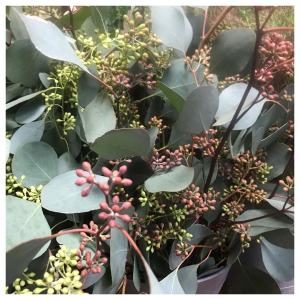 Drowning in the most scrumptious foliage and berries!… Tis The most wonderful time of the year! 🎄❤️.#green #foliage #christmas #winter #yummy #arrangement #pine #eucalyptus #berries #independent #florist #shoplocal #supportsmallbusiness #burnham #victoriajaneflowers #lush #christmasshopping #christmaspresents