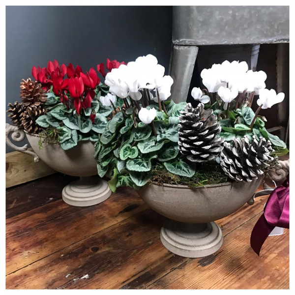 Lots of planters available at different price points available for sale ❤️🌿 🎄(currently inside the shop keeping dry! 🙄)..#planters #gifts #bulbs #hyacinth #amaryllis #red #white #gift #christmas #instaplant #instaflower #shoplocal #itsbeginningtolookalotlikechristmas #theseasonforgiving