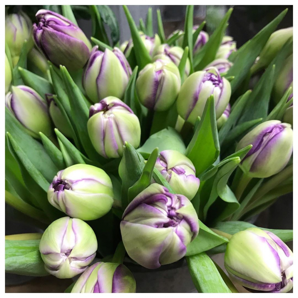 Yummm 😋 Its Tulip time! 😃...#tulips #spring #itstime #springflowers #love #cutflowers #flowerbunch #underthefloralspell #home #garden #shoplocal #supportlocal #independantbuisness #independentartist #floralartist