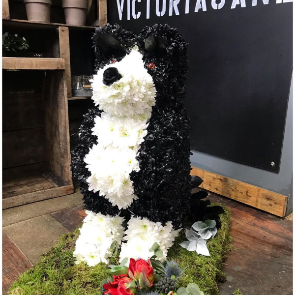 Bespoke funeral tribute of a Collie Dog made this week 🐕 ...#bespoke #funeral #tribute #sympathyflowers #flowertribute #collie #dogsofinstagram #flowersofinstagram #sayitwithflowers #doglover #finalgoodbye #victoriajaneflowers #flowerart