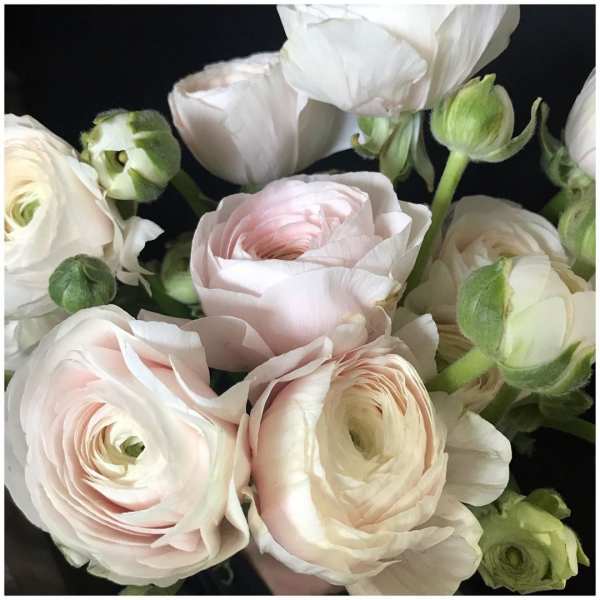 Apologise for the Ranunculus spam but these beauties have completely stolen our hearts on this weeks delivery! 😍❤️ I mean…. wow!.. We have something very special to make which they will work perfectly for! 🌿🌸❤️...#ranunculus #pretty #pink #petals #fluffy #weddingseason #spring #springflower #summer #sympathyflowers #victoriajaneflowers #florist #instaflower #underthefloralspell #flowerpower #